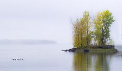 Back to the island (Karma2c) Tags: autumn lachine lachinecanal lacstlouis lakeshore ducks row lake island