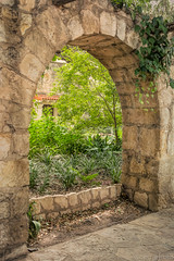 An arch at the Alamo (pattycphotography) Tags: history leaves vines vine plants smalllandscapes microscopiclandscape microlandscape landscape masonry old light city summer trees tree green yellow garden art arch stone sanantonio texas cityscape