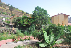 Канарський сад-город, Гомера, Канарські острови  InterNetri  0671