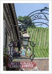 Enseigne dans les vignobles (Francis =Photography=) Tags: europa europe france grandest alsace hautrhin 68 riquewihr enseigne restaurant larbaletrier vignoble