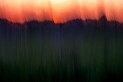 Cattails Meadow and Trees at Sunset (hmthelords) Tags: abstract