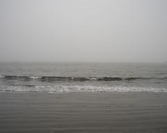 DSC08628 (GusTheArtist) Tags: yescoast scrp sonomacounty regionalparks pacificcoast doran doranbeach ocean beach