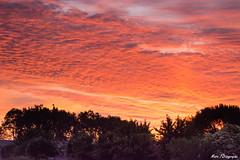 Sunrise (Marc Forestier) Tags: leverdesoleil charente ciel paysage