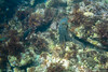 20180422-DSC_0439.jpg (d3_plus) Tags: d700 drive fish marinesports apnea fishingport 景色 185mm watersports sky マリンスポーツ ニコン nikon 素潜り ウォータープルーフケース inonuwlh10028m67type2 nikon1j4 漁港 海 nikond700 地形 scenery イノン ズーム nikon1 waterproofcase landscape 1nikkor185mmf18 izu sea 185mmf18 underwater ワイドコンバージョンレンズ skindiving uwlh10028m67 wpn3 japan 50mmf18 50mm dailyphoto nikonwpn3 水中 nikkor スキンダイビング 息こらえ潜水 port 自然 inon snorkeling ワイコン nature ニコン1 diving zoomlense wideconversionlens 風景 eastizu j4 空 日本 東伊豆 daily シュノーケリング 魚