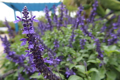 IMG_8432 (Usagi93190) Tags: macro flower plant proxi botanical gardens naples florida