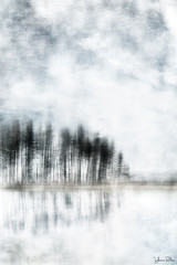 reaching for the sun . . . (YvonneRaulston) Tags: new zealand nz trees sky clouds texture reflection atmospheric art abstract artistry creativeartphotography calm colour creative dream day digitalart digital desaturated emotive emotion fineartgrunge impressionist icm lake moody moments mysterious mist morning soft sony photoshopartistry peaceful surreal tree water watercolour yvonneraulston