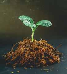 Young tree plant (www.icon0.com) Tags: spring leaf growth tree green seedling nature plant growing life small gardening sprout fresh agriculture botany environmental ecology young sapling soil dirt concept garden seed new background land root stem