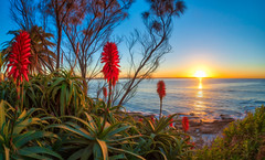 Sunrise 24th July 2018 (Michael.Sutton) Tags: sunrise cronulla winter australia aloe native flower red blue landscape sunset colorful ocean sydney nsw new south wales plant nature