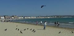 Weymouth Beach. (jenichesney57) Tags: sky blue sea sand beach water waves people houses birds black many panasoniclumix summer bay fun shadows weymouth seaside coast buildings soaring hot
