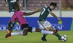 Deportivo Árabe x Palmeiras (30/06/2018) (sepalmeiras) Tags: artur palmeiras rommelfernandezguiterrez sep amistoso árabeunido