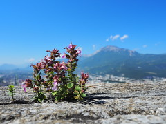 Bastille above Grenoble (beudii) Tags: bastille grenoble france frankreich travel travelling reisen mountains berge
