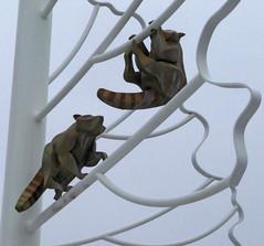 Minnesotta Zoo 12-20-2014 - Raccoon Sculpture 1 (David441491) Tags: minnesotazoo raccoon sculpture statue