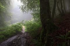 camino del arrieta (canalesjacinto58) Tags: paisaje niebla ambiente misterio