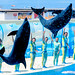 Jump! At the Dolphins and Sea Lions Show of Enoshima Aquarium, Fujisawa : イルカとアシカのショー(藤沢市・新江ノ島水族館)