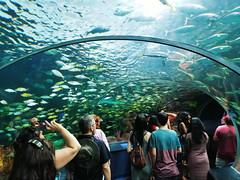 20180526_161020 (giltay) Tags: tube fish