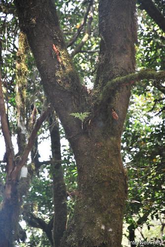 Національний парк Гарахонай, Гомера, Канарські острови  InterNetri  0693