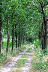 Green path (Photography by Martijn Aalbers) Tags: forest bos trees bomen leaves bladeren green groen branches takken path pad walk wandeling nature natuur colour kleur color sunny zonnig summer zomer light licht shadow schaduw canon eos 77d ef70200mm f4l is usm wwwgevoeligeplatennl utrechtseheuvelrug netherlands