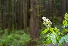 Forest Flower (s.d.sea) Tags: spring north bend washington washingtonstate little si hiking hike trails trail forest cascades mountains woods trees green pentax k5iis pnw pacificnorthwest wildflower