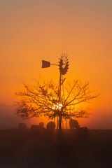 Sunrise || Richmond Lowlands || Sydney (David Marriott - Sydney) Tags: richmondlowlands newsouthwales australia au richmond windmill cow sunrise dawn orange sydney nsw silhouette