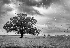 Here comes that rainy day feeling again (Dave_Bradley) Tags: rain oak landscape raining water clouds black white bw olympus em5 pennsylvania usa nopeople oaktree blackandwhite outdoorphotography naturephotography