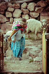 Isla del Sol (paris_sousa) Tags: pastora ovejas isla aguayo shepherdess sheep island isladelsol bolivia américa coya inca imperioinca