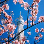 TOKYO SKYTREE_東京スカイツリー_10 thumbnail