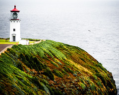 Lighthouse at Kilauea (f.albertowilson) Tags: kauai panasonic g85 lumix lighthouse coast hawaii ocean kīlauea kīlaueapoint nationalwildliferefuge