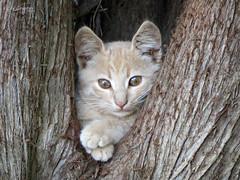 Rest house. (Vitaly Giragosov) Tags: cat pet animal mammals кошка