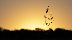At sunset (ZeGaby) Tags: nature naturephotography pentaxda300mm pentaxk1 sky sunset fontainesuray grandest france fr bokeh