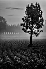 Fontecada (Feans) Tags: sony a7r a7rii ii fe 24105 fontecada negreira santa comba galiza galicia fog mist neboa