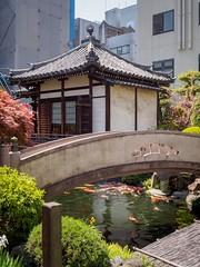 Side street temple with Koi (AMcUK) Tags: taitōku tōkyōto japan jp em10 omdem10 omdem10mkii em10mkii omd olympus olympusuk m43 micro43rds micro43 microfourthirds nippon tokyo shrine temple buddha buddhism buddism