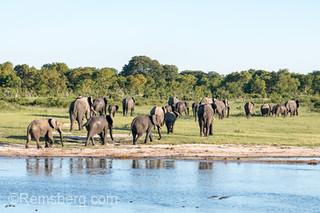 A family of elephants leaving a watering hole in Hwange National Park. Hwange, Zimbabwe.
