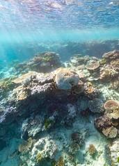 Underwater Heron Island-6 (Quick Shot Photos) Tags: australia canon canoncollective greatbarrierreef heronisland queensland underwater bogie au