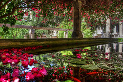 Palma 27 June 2018 00021.jpg (JamesPDeans.co.uk) Tags: forthemanwhohaseverything landscape flowers plants nature printsforsale industry waterlillies objects jamespdeansphotography transporttransportinfrastructure water pond hdr columns reflection spain majorca palma vanishingpoint mallorca camera architecture wwwjamespdeanscouk landscapeforwalls europe petals digitaldownloadsforlicence