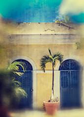 Caribbean Dreams, Old San Juan (Foto Blitz Color) Tags: sanjuan puertorico july summer oldsanjuan palmtree building yellow doors