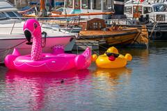 Inflatable summer friends (rudi.verschoren) Tags: inflatable summer friends waiting high tide water docks antwerp belgium reflection pink yellow boats