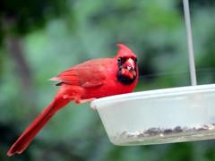 IMG_7065 (kennethkonica) Tags: nature birds animalplanet animal animaleyes autumn canonpowershot canon usa america midwest indianapolis indiana indy color outdoor wildlife