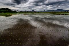 梅雨空 #2ーRainy season Sky #2 (kurumaebi) Tags: yamaguchi 秋穂 山口市 nikon d750 nature landscape 田 田んぼ ricefield cloud 雲 reflection