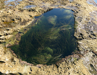 Tidepool at Botanical Beach on Vancouver Island, Canada