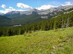 Nihahi Ridge Scramble - A welcoming meadow on the way up (benlarhome) Tags: kananaskis alberta canada nihahiridge trail path hike scramble rockies rockymountain