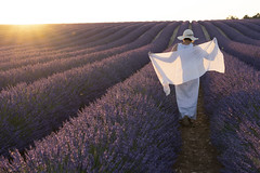 ... (Stefano Montagner - The life around me) Tags: france francia provence provenza lavender agriculture field nature provencealpescotedazur purple flower ruralscene lavendercoloured scented outdoors plateaudevalensole summer plant perfume blue crop people