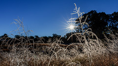 Look out, look out Jack Frost is about (jan_clewett) Tags: southeastqueensland abismalweather july subzero midwinter geham frost cold