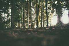 (a└3 X) Tags: natur nature alexander alexfenzl olympus sonne licht wald österreich neustift landscape outdoors color tree bäume wildlife 3x