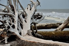 2018 05 06 064 Hunting Island, SC (Mark Baker.) Tags: 2018 america baker carolina hunting island mark may north south us usa beach day outdoor photo photograph picsmark spring states united