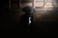 Si le ciel était rose... (Âmes Animales Photographies • Cassandre SCZ) Tags: puppy pupps puppies puppyphotography photography dogsphotography dogphotography chiots chiens dogs dog chien nikon nikond750 nikonfrance natural nikon750 nikonfr nikonusa nikoneurope naturel