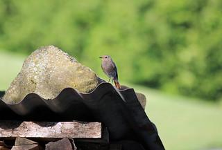 Bird in the Summer Sun