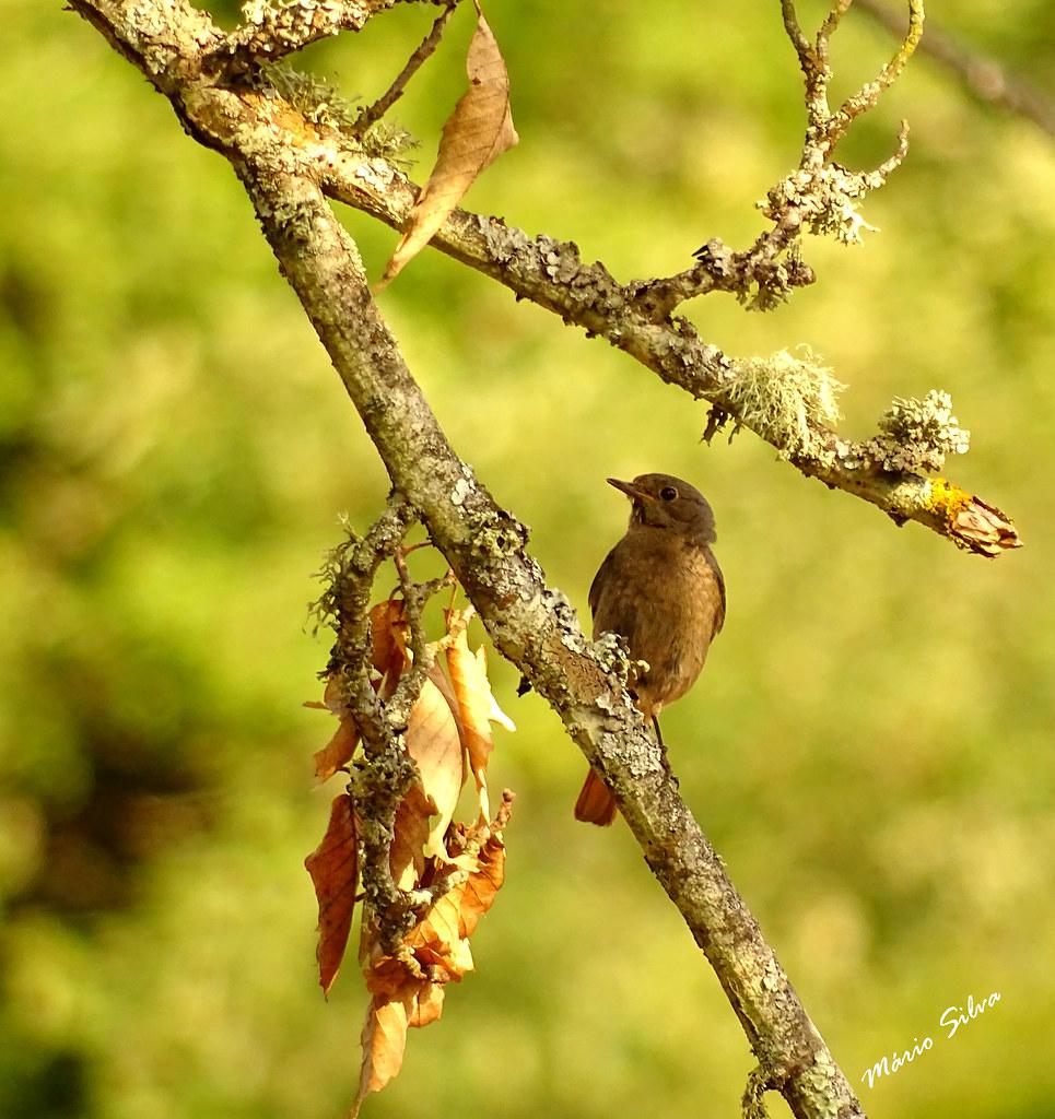 Águas Frias (Chaves) - ... ave observadora pousada num ramo ...