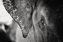 Before Time..... (MudMapImages) Tags: elephant asianelephant