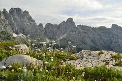 Soundgarden (matteo.buriola) Tags: friuli alpi giulie passo degli scalini mountains landscape paesaggio nature flowers trekking alps nikon d3100