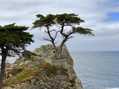 Monterey Bay, CA (- Adam Reeder -) Tags: california ca united states west coast pacific wwwkk6gpvnet kk6gpv adam reeder adamreeder areed145 landscape grass bay cliff seashore promontory lakeside y2018 m05 d26 lat370 lon1220 monterey photo jpg apple iphone x fountain breakwater megalith cliffdwelling brass obelisk tree sky